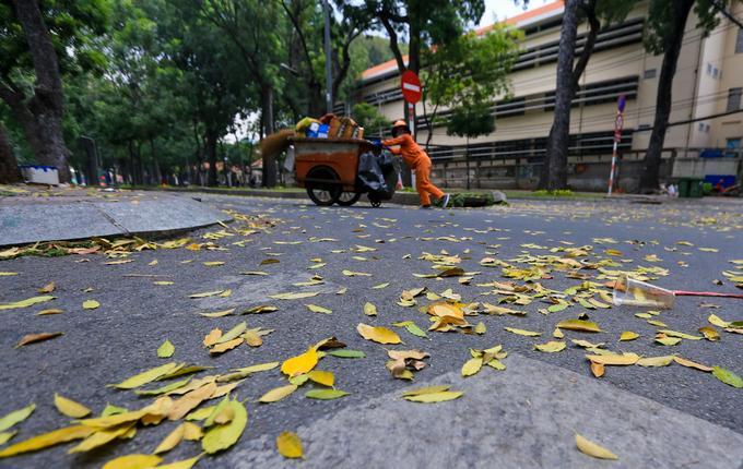 Trước đó, giữa năm 2016, thành phố đã tiến hành di dời, bứng dưỡng 14 cây xà cừ ở đường Tôn Đức Thắng để phục vụ cho dự án xây dựng tuyến đường sắt đô thị số 1 Bến Thành - Suối Tiên.