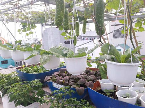 Sân vườn luôn sạch sẽ khi các khay rau được nối chung một đường ống cấp thoát nước và thùng trồng rau có lớp ngăn cách giúp nước thoát ra ngoài không mang theo đất.