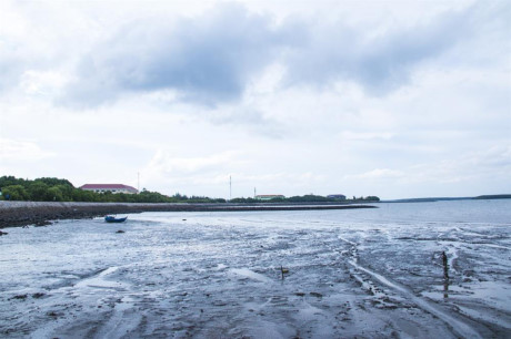 Những buồi chiều thủy triều rút nước, để lộ đất biển bùn đen chạy dài cả vài trăm mét, lũ trẻ tranh thủ ra cào hào, bắt ốc,...