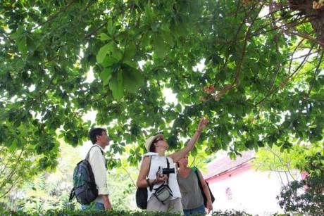 Các du khách nước ngoài cũng thích thú với vẻ đẹp của loài hoa Sala.