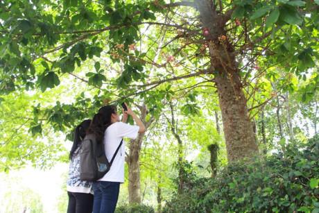 Hai bạn trẻ dùng điện thoại chụp hoa Sala làm kỷ niệm.