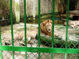 Vườn thú đang chăm sóc, nuôi dưỡng hơn 120 loài động vật với số lượng hơn 1.000 con.