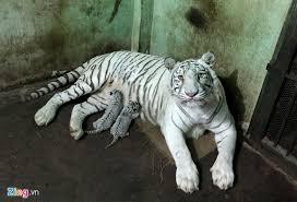 Trong đó có nhiều loài động vật quý hiếm của Việt Nam và thế giới