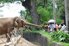 Trải qua 150 năm, với nhiều thăng trầm, Thảo Cầm Viên đã trở thành một trong 10 vườn thú lâu đời nhất thế giới. Hiện, sở thú như một khu rừng tự nhiên trong lòng thành phố hiện đại với hơn 2.500 cây xanh thuộc 360 loài.