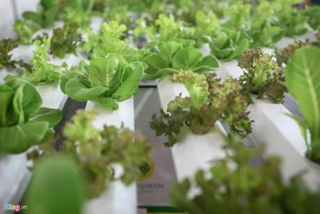 Hội chợ cũng xuất hiện nhiều gian hàng giới thiệu phương pháp trồng rau thuỷ canh. Một giàn trồng rau thuỷ canh dài 4,5 m được lắp đặt có giá khoảng 8 triệu đồng.