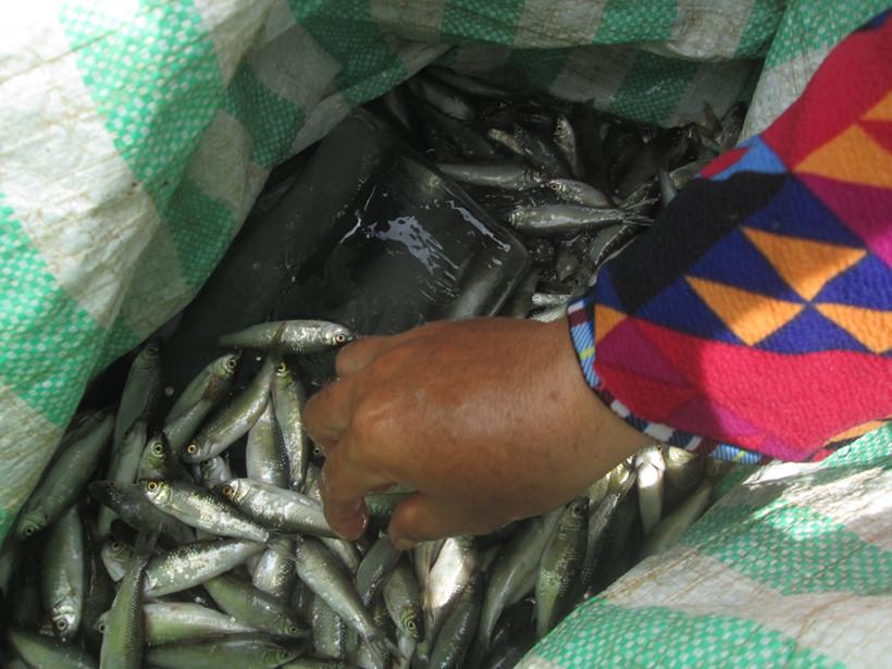 Cá được đảm bảo độ tươi ngon