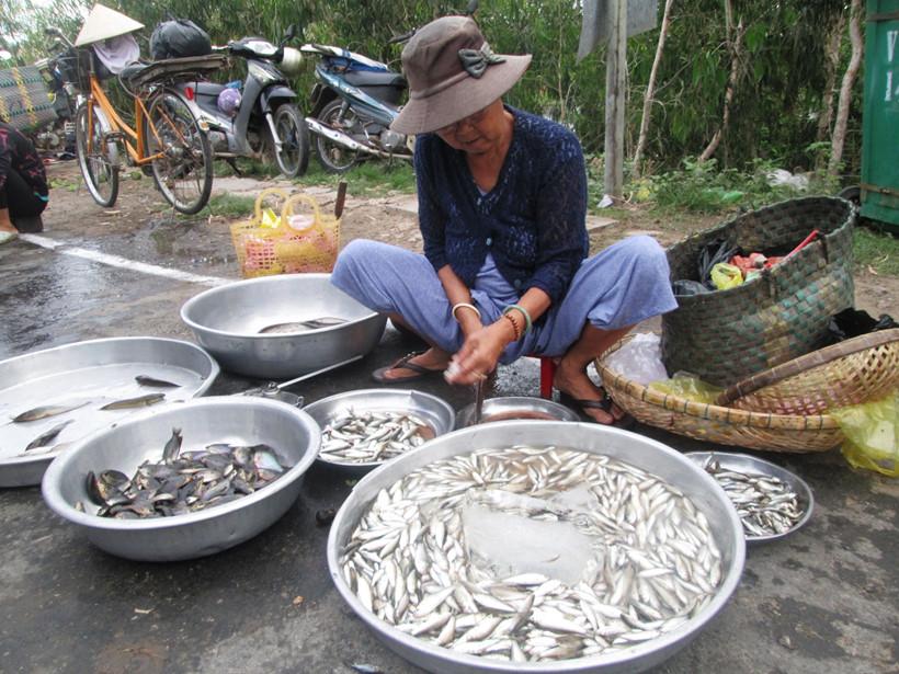 Cá linh được cắt bỏ bụng bán với giá từ vài chục đến vài trăm ngàn đồng/kg THANH DŨNG