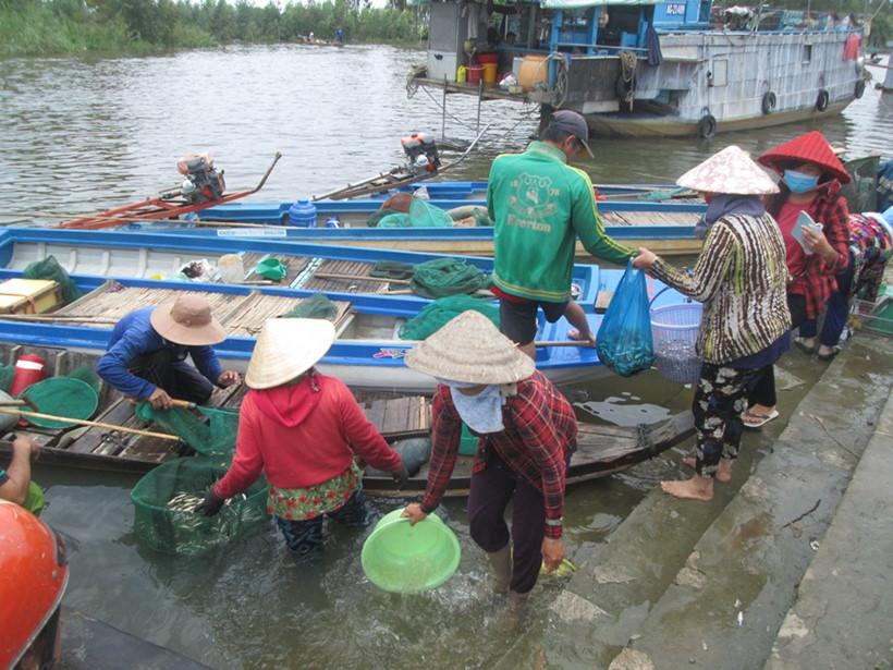 Khi các xuồng cá đến, cảnh mua bán cá diễn ra sôi động THANH DŨNG