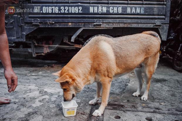 Là giống chó lai nên Gấu hay nóng trong người. Em có sở thích uống nước đá.