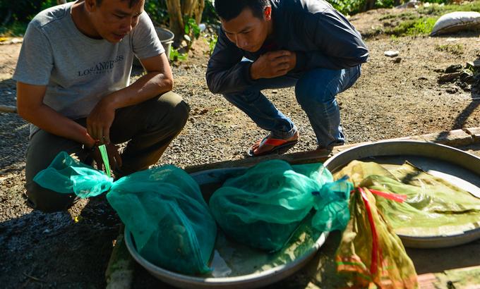 Rắn cũng là món đặc sản của dân nhậu. Mỗi gian hàng có 4 - 5 bao cước đựng các loại rắn nước như trun, nước, hổ hành, ri, bông súng