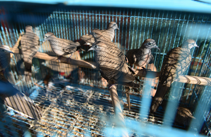 Một số gian hàng còn bán thêm chim cu, bồ câu, gà vịt, thỏ... Tuy nhiên, theo các tiểu thương, mặt hàng rắn, chuột vẫn bán chạy nhất.