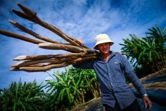 Anh Lê Thanh Sơn, 44 tuổi, quê Đồng Tháp là một trong những người đầu tiên khai hoang làm rẫy ở khu đất thuộc xã Phong Phú, huyện Bình Chánh, TP.HCM.