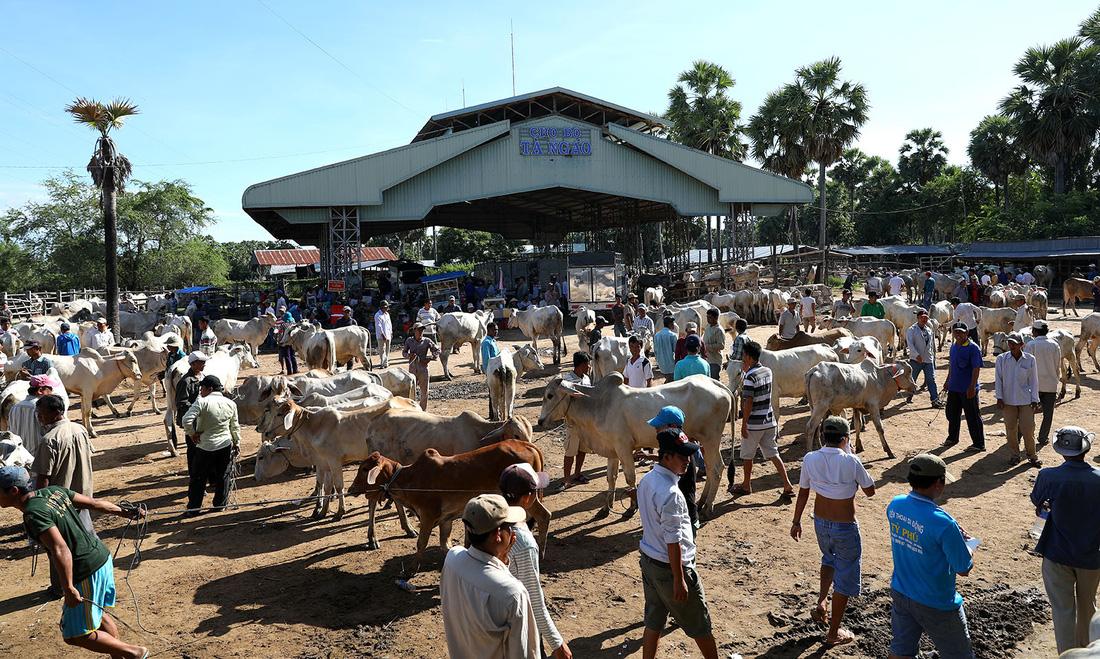 Chợ bò bắt đầu nhộn nhịp từ sáng sớm - Ảnh: HỮU KHOA