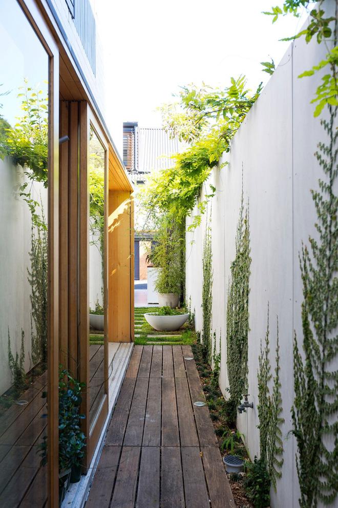 Lối đi nhỏ được xây dựng men theo chiều dài của ngôi nhà. Trên những bức tường bao, cây xanh rễ chùm được trồng phủ kín đem lại cái nhìn mở, kết nối chặt chẽ với thiên nhiên.