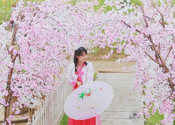Dù chỉ là dàn hoa đào giả nhưng lên hình lung linh chẳng kém chi Nhật Bản, Hàn Quốc. Ảnh FB Chụp ảnh ngoại cảnh Long An