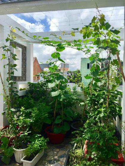 Khu vườn cũng trồng các loại rau gia vị như hương thảo, lá cà ri, lá cẩm... để chị Trân được thoả đam mê.