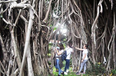 Nhiều bạn trẻ thích thú chụp ảnh với cây đa cổ thụ ở giữa Sài Gòn