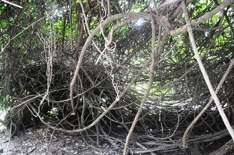 Tại Thảo Cầm Viên Sài Gòn còn độc nhất cây dây gùi cuối cùng của rừng nguyên sinh xưa còn sót lại đến ngày nay. Theo nhân viên đội cây xanh Thảo Cầm Viên, cây dây gùi tồn tại hàng trăm năm. Trước đây, khu vực này là rừng nguyên sinh nhưng người Pháp khai phá.