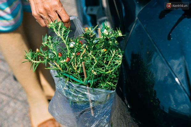 Lựa cho mình một cây ưng ý, mang mảnh xanh về nhà, mang theo điều vui giản đơn nữa.