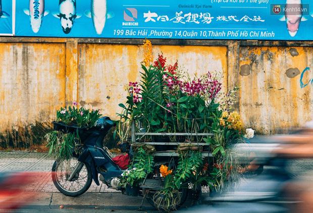 """Con đường hoa và cây kiểng ở Bắc Hải cũng là nơi """"tập kết"""" nhiều người bán cây hoa di động"""