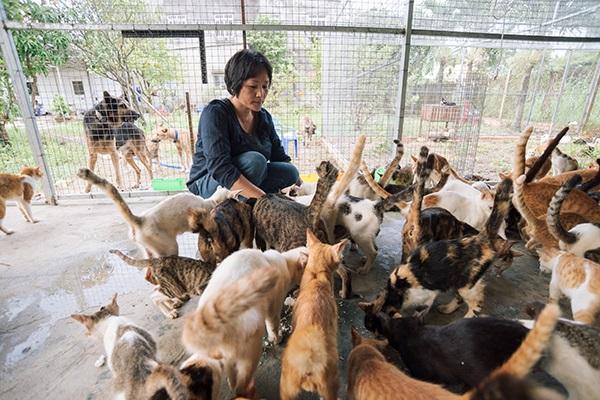 Hơn 300 con mèo giải cứu tại lò mổ được cưu mang, chăm sóc tận tình