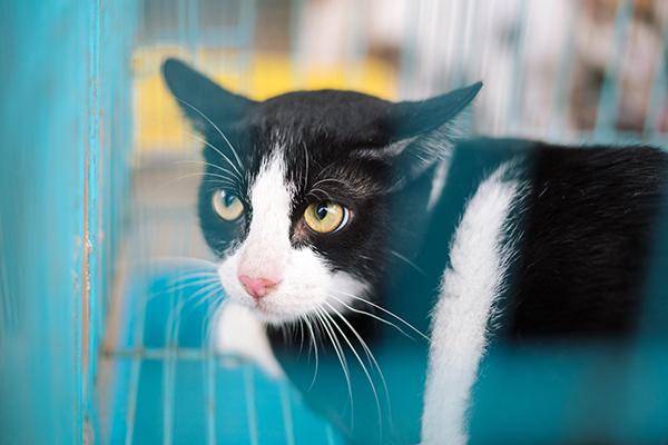 Chị chưa vội cho đám mèo này vào chuồng chung với 300 con mèo khác...