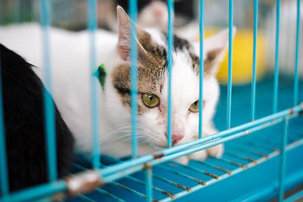 'Mèo nhà đó, hiền lắm, từ lúc cứu về mặt cứ buồn thiu vậy đó' - chị nói thêm