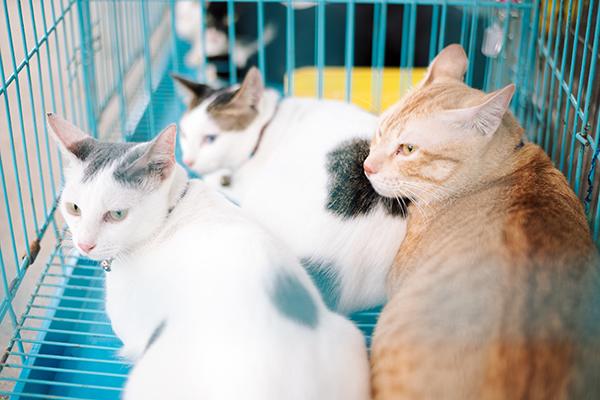 Chỉ tay vào lồng mèo gồm những chú mèo to béo, lông mịn, chị nói: 'Đám này chị mới cứu sáng nay'