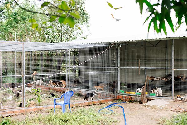 Nơi nuôi 300 con mèo mà chị Quyên cứu được từ những lò mổ rộng 60m2