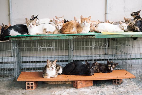 Đám mèo rất ngoan, ăn xong lại mỗi con một góc... nằm ngủ