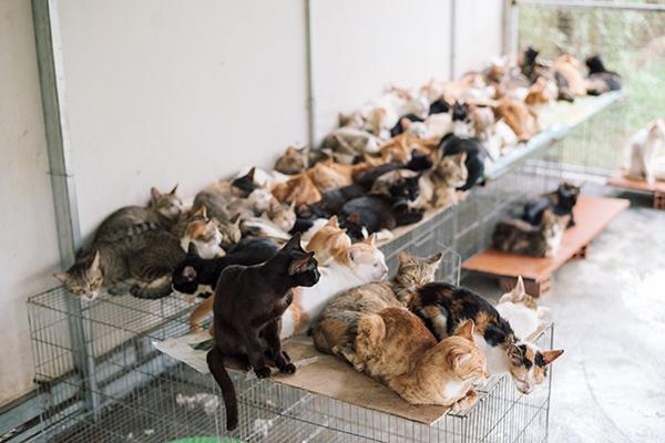 Khu vực nuôi mèo được vợ chồng chị Quyên thay phiên nhau dọn dẹp thường xuyên
