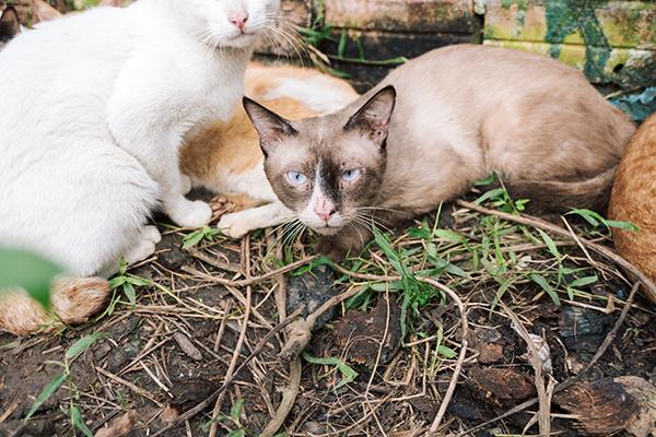 Có những chú mèo khác biệt, chị Quyên chỉ mong chủ nhân thật sự tìm đến nhận lại