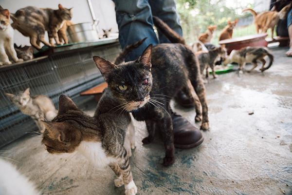 Nhiều chú mèo bị thương nặng, gày xơ xác, đang dần phục hồi