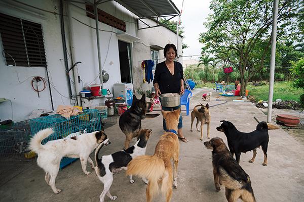 Trước khi cho đám mèo trong chuồng ăn thì chị làm riêng một phần cơm trộn cho những chú chó