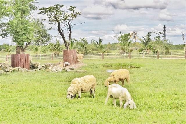 Cách trung tâm thành phố chỉ 60km là Nông trại xanh hay còn gọi với cái tên khác Green Noen, tọa lạc tại huyệ Củ Chi.