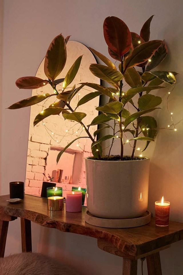 Đèn dây tô điểm cho chậu cây và một góc không gian trong phòng thêm rực rỡ.