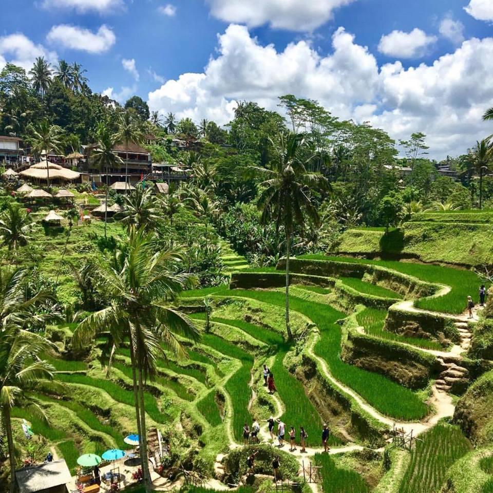 Ruộng bậc thang ở Bali.