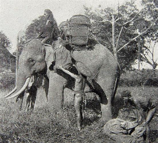 Voi là phương tiện chuyển phát đặc biệt tại một số khu vực hẻo lánh ở Tây Nguyên. Nhân viên chuyển phát là các nài voi người dân tộc thiểu số. Ảnh: Belle Indochine.