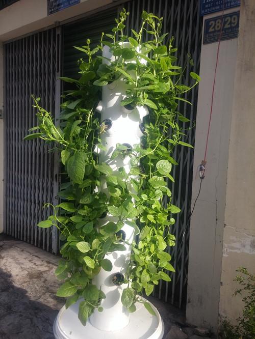 Một trụ cây rau mồng tơi miễn phí được anh Sơn đặt trước nhà cho người dân sử dụng