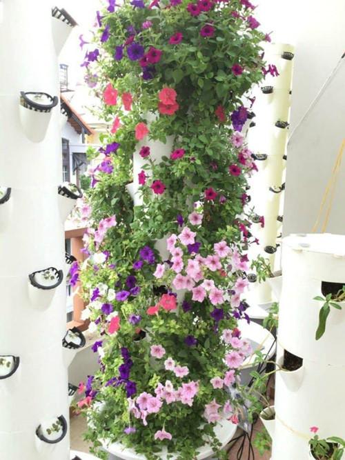 Ngoài rau, củ, quả thì anh Sơn còn trồng được hoa
