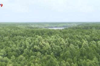 Không gian xanh mướt của rừng ngập mặn.