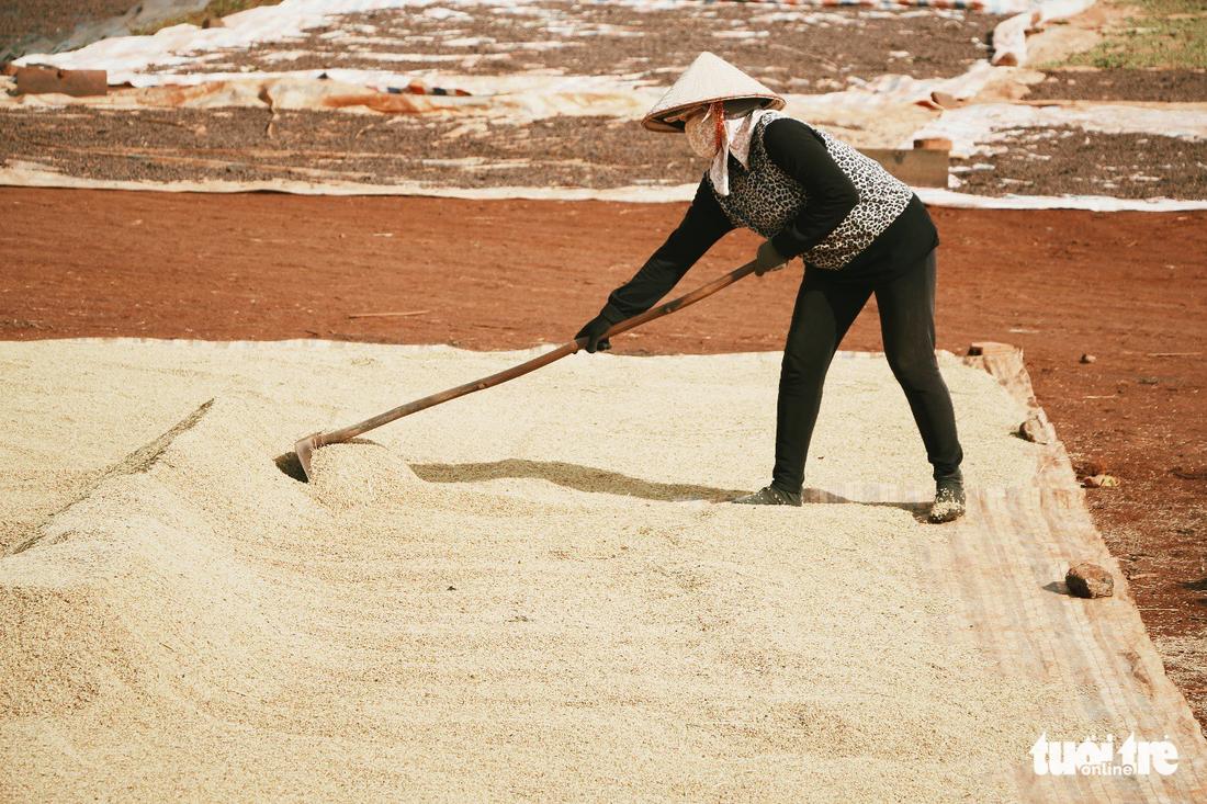 Những hạt lúa vàng tươi trước khoảng sân nhà...