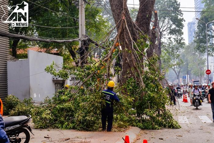 Một nhánh cây lớn đang được đưa xuống. Trước khi đốn hạ cả cây, việc tỉa cành là bắt buộc để có thể dễ di chuyển vì những cây trên đoạn đường có chiều dài lên tới 15 mét.