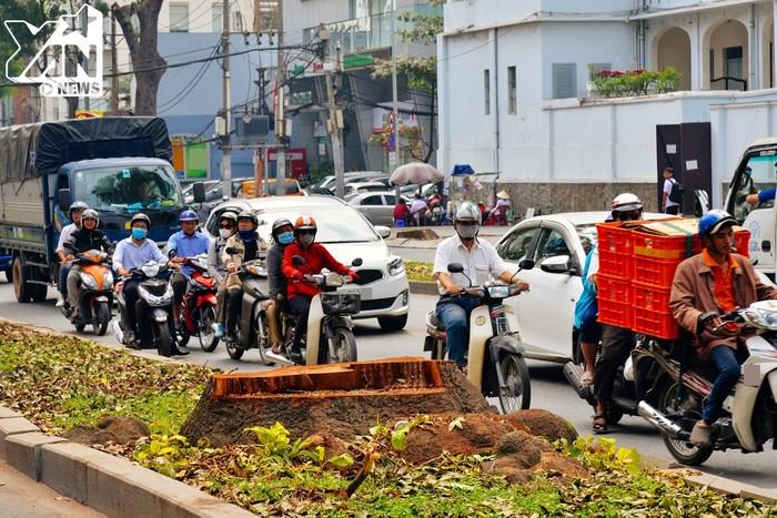 Nhiều ngươi tham gia lưu thông tiếc nuối ngoái nhìn gốc cây trơ trọi. Con đường rợp bóng cây xanh của Sài Gòn nay đã không còn nữa.
