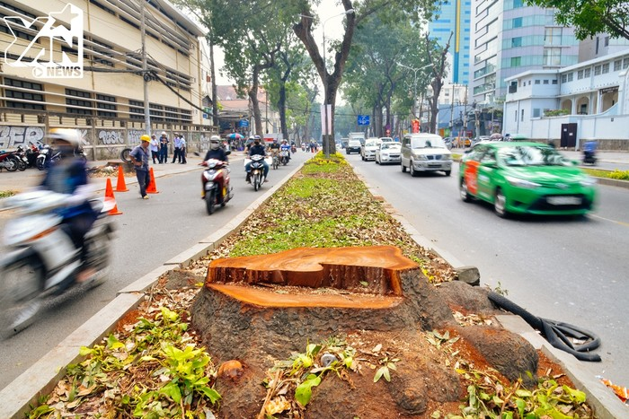"""Con đường Tôn Đức Thắng ngập tràn cây xanh ngày nào giờ đã dần trở nên khác lạ khi mất đi """"bóng xanh""""."""
