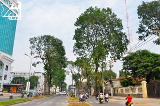 Hàng cây xanh trên tuyến đường Tôn Đức Thắng tiếp tục đốn hạ và di dời.