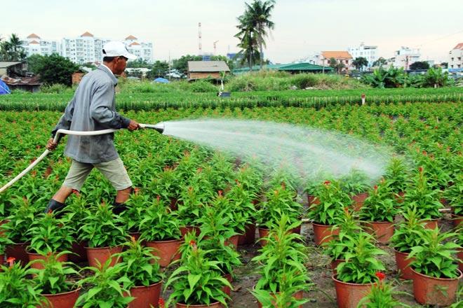 Theo người trồng hoa, năm nay tiền giống, chậu, phân bón, nhân công tăng khoảng 5% so với năm ngoái.