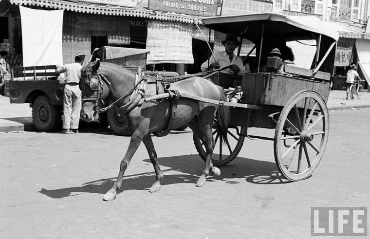 Xe thổ mộ trên phố Rue Viénot (nay là đường Phan Bội Châu), Sài Gòn năm 1950. Đây là loại phương tiện đi lại bình dân mà hầu hết cư dân của Sài Gòn có thể sử dụng. Ảnh: Life.