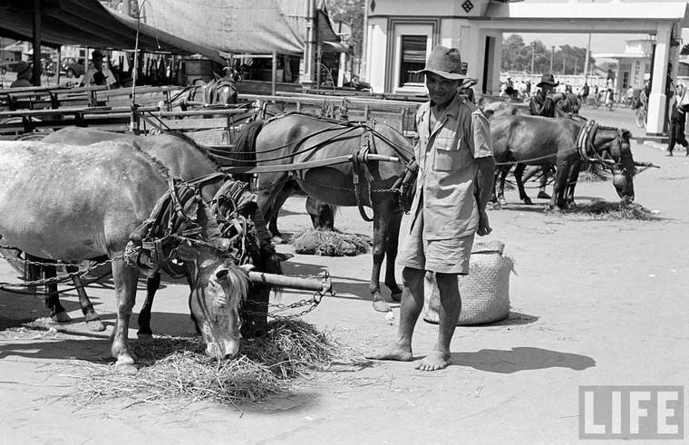 """""""Trạm xăng"""" dành cho những chú ngựa ở Sài Gòn năm 1950. Thập niên 1940-1950 là giai đoạn phát triển bùng nổ của xe thổ mộ. Khi đó, khu vực chợ Bến Thành luôn có hàng chục chiếc xe ngựa kiểu này. Ảnh: Carl Mydans."""