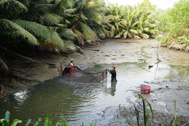Đánh bắt cá trong các ao tự nhiên